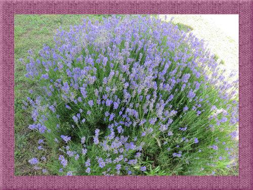 Des fleurs et la nature