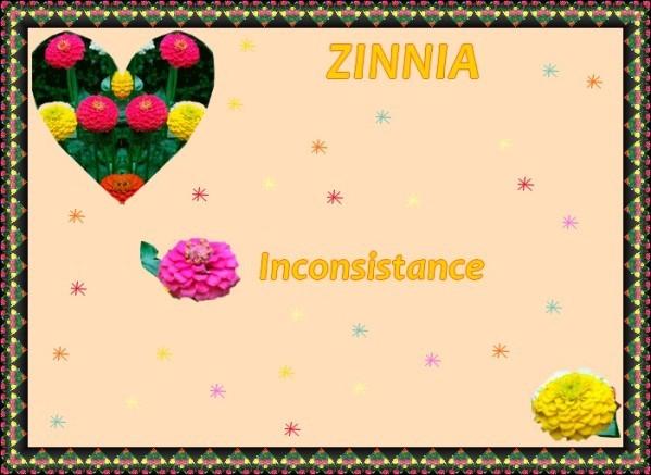Zinnia.jpg