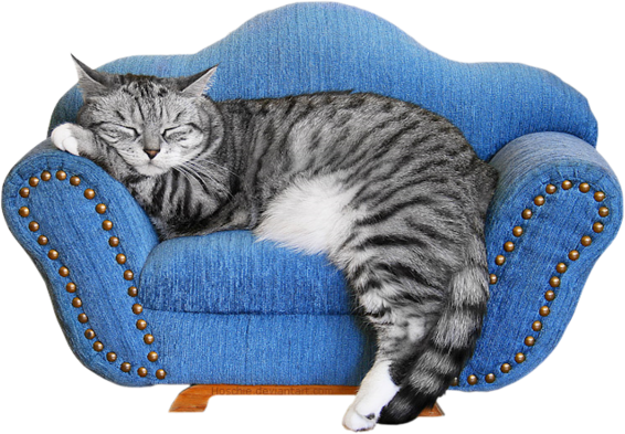 chat qui dort sur un canapé