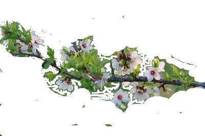 Calendrier des tailles des arbustes