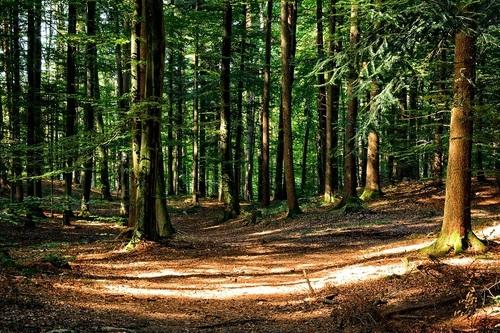 La clairière aux aux arbres feuillus