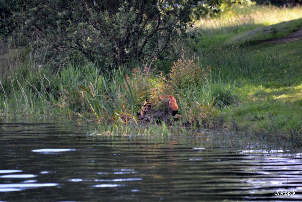Le lac du Drennec