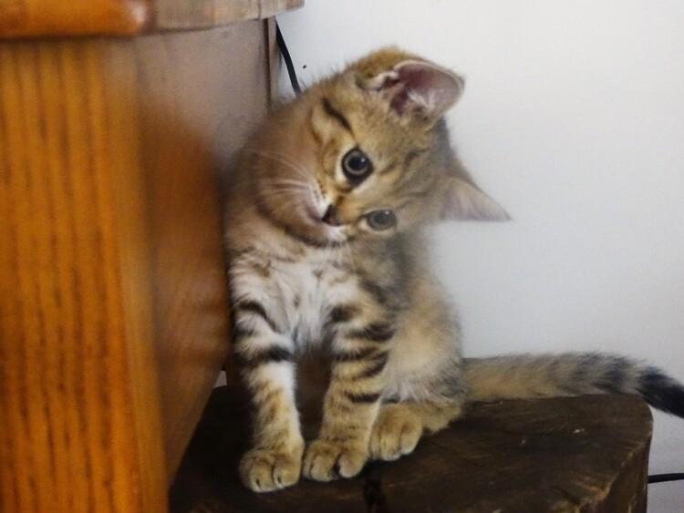 Dimanche c'est chat - Quya