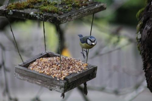 Le bal des oiseaux