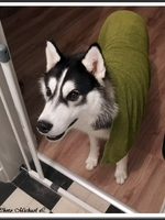 Stark (presque 1 an)