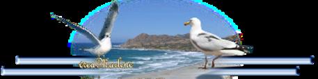 ♥ L'albatros ♥