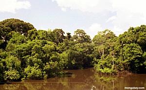 rio branco forest2