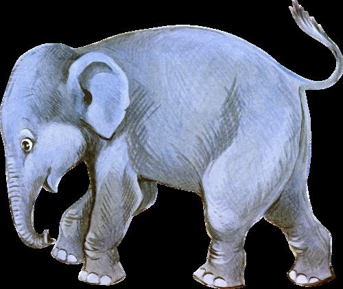Eléphants Série 8