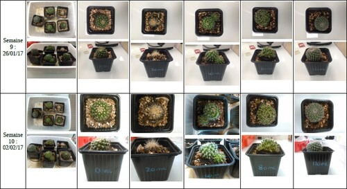 résultats expérience cactus