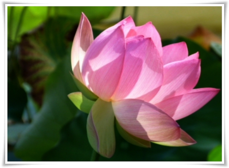 Majestueuse plante aquatique