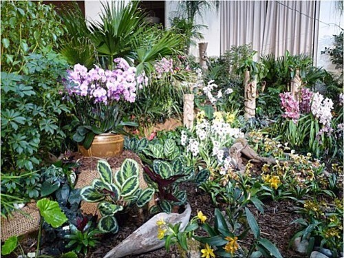 Orchidees-Menton-2011--9-.JPG