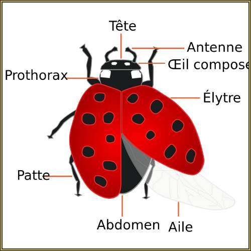 Le grand Almanach de la France : COCCINELLE