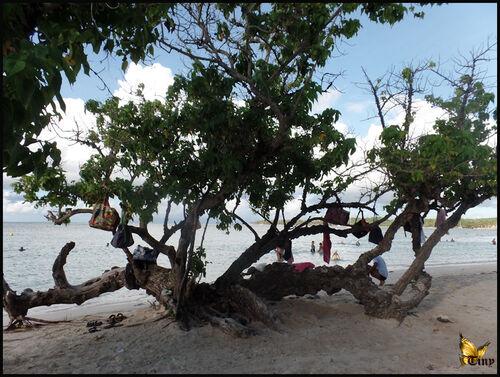 Plages de la Guadeloupe