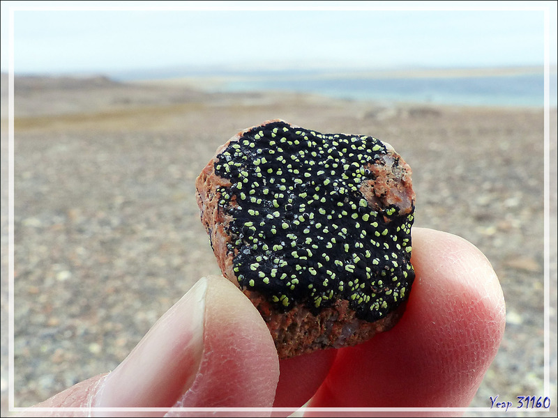 Un univers de pierres et lichens - Fort Ross - Somerset Island - Nunavut - Canada