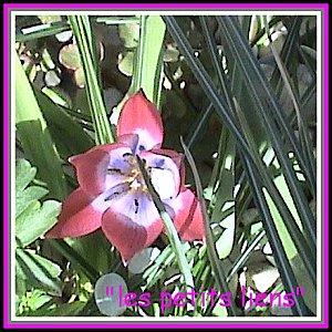 Fleurs pâques 201011 (1)cadré GF