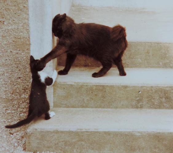 Les chats de la famille...