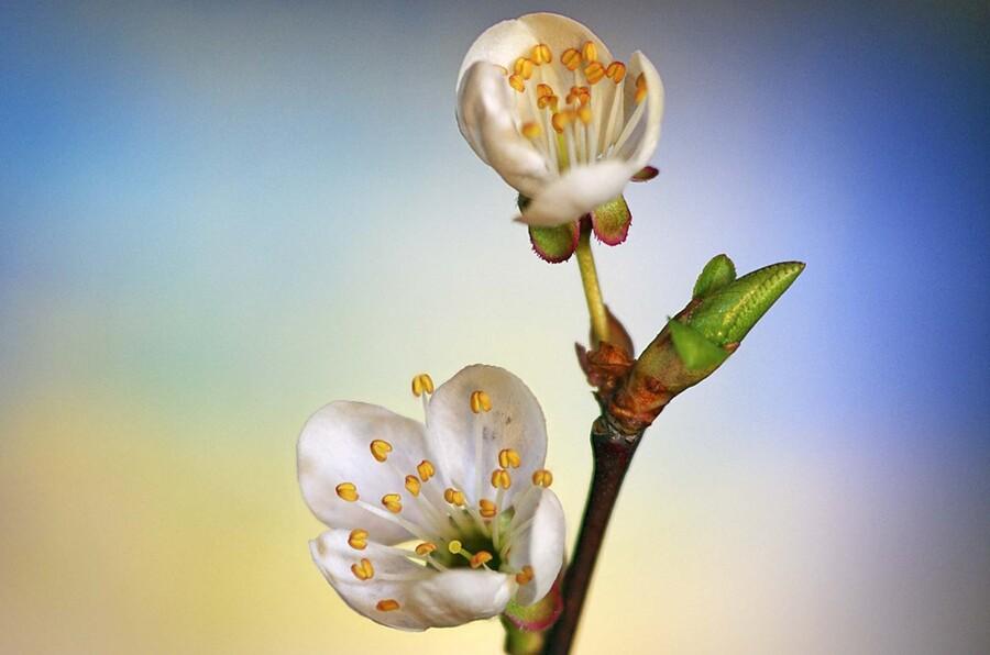 « Premier sourire du printemps »