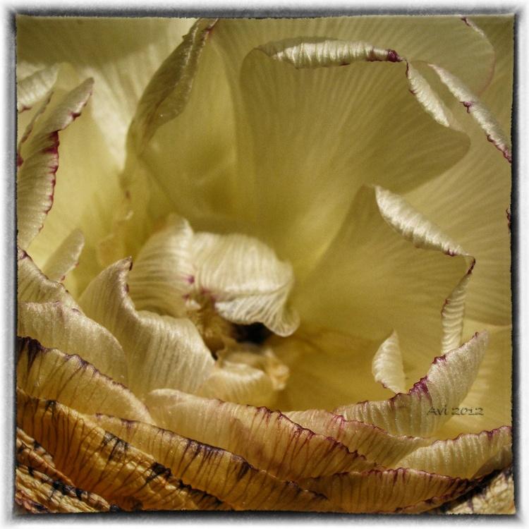 Dernières photos avant de jeter le bouquet