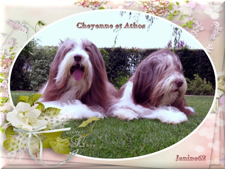 Eté 2018 * photos d'Athos &Cheyenne