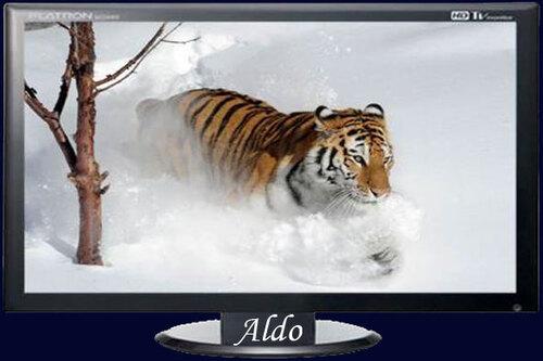 PPS Animaux dans la neige