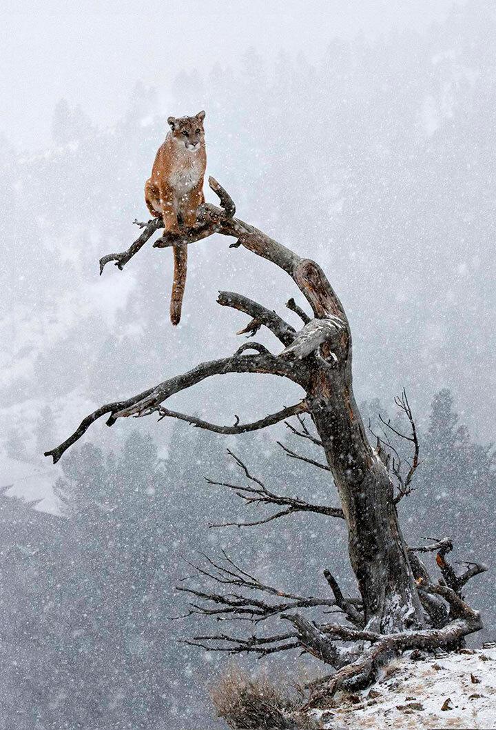 xx-animaux-dont-la-beaute-est-sublimee-par-les-couleurs-hivernales10