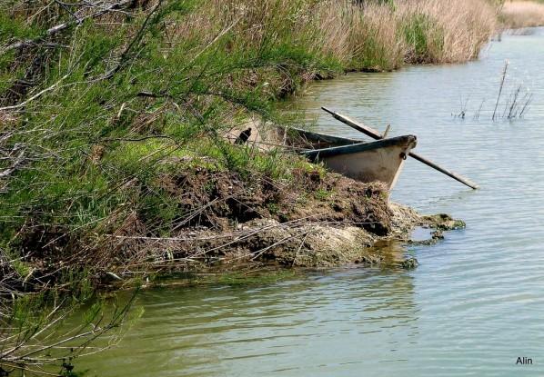 T01 - Barque