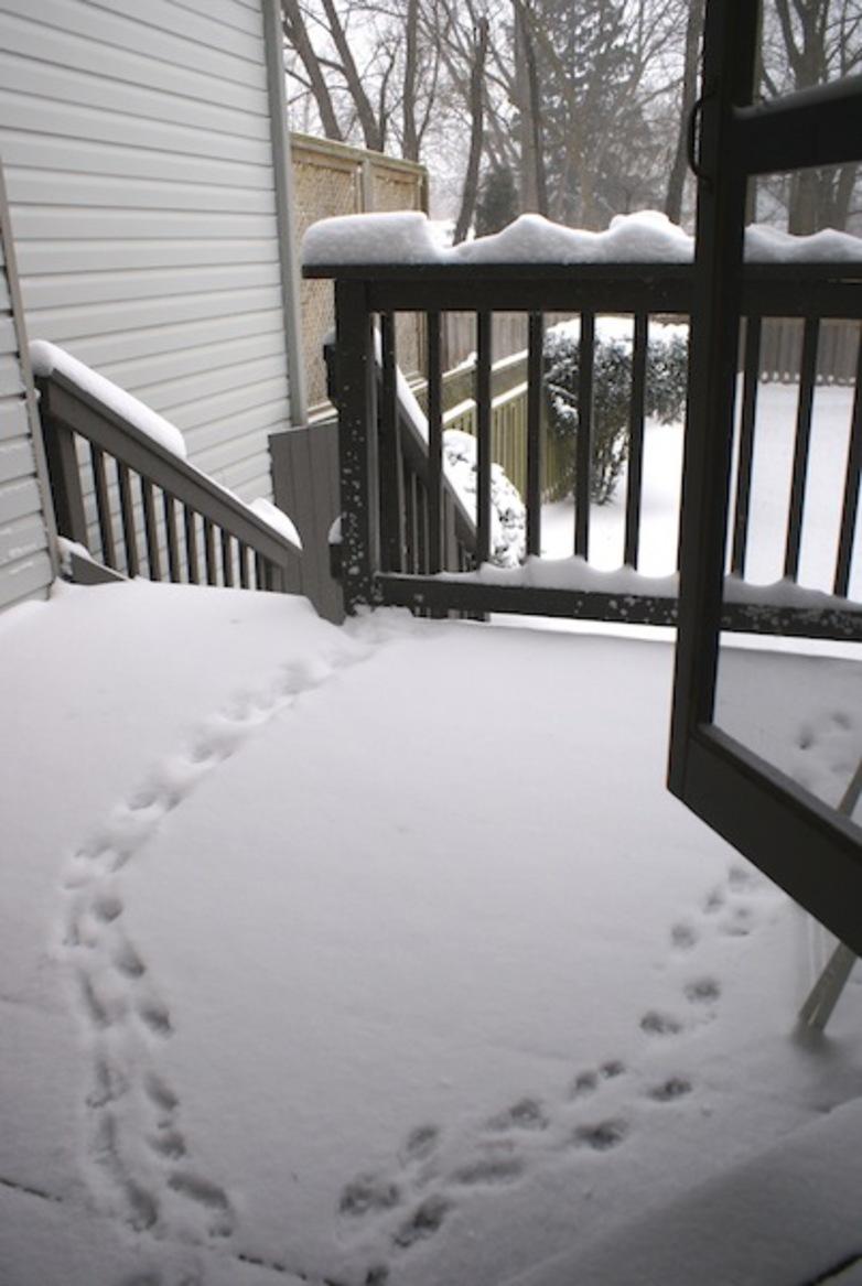 Alerte, tempête de neige !