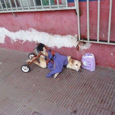 La chienne handicapée est jetée à la rue avec un sac de couches et une note - son histoire est émouvante