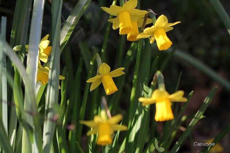 Fleurs de saison...suite