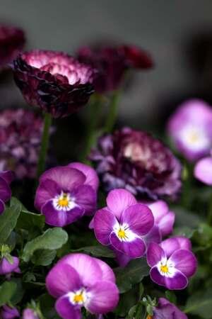 Jardinières de printemps (2/3)