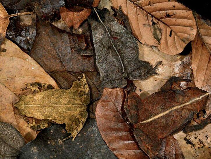 Articles/Photos sur les animaux - 3 - 20 images d'animaux et leur camouflage