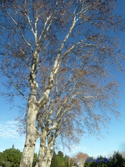 BALADE sous le soleil d'automne