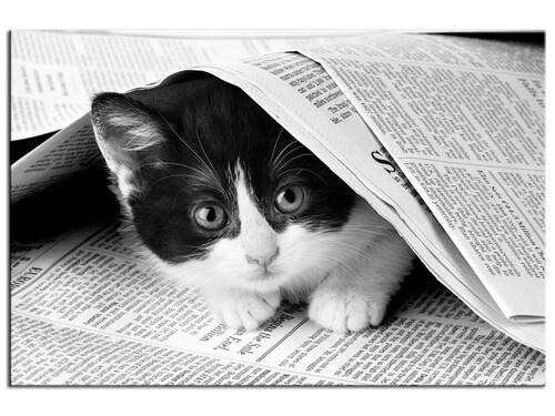 07 - Les chats et le journal suite