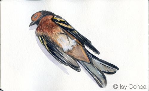 L'oiseau mort (Jean Richepin)