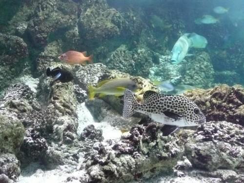 aquarium-la-rochelle-2.JPG