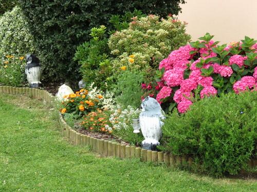 un peu de mon jardin .....