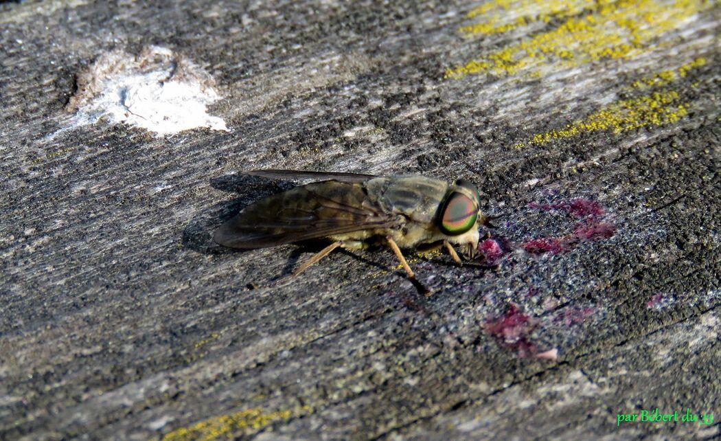 un insecte inconnu ?