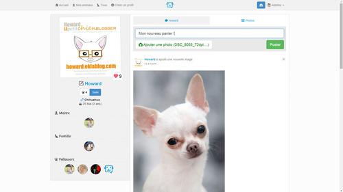 Partagez les photos de votre animal avec Sneepets