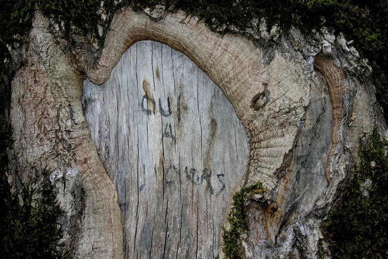 Oui à l'ours - Pyrénées garonnaises