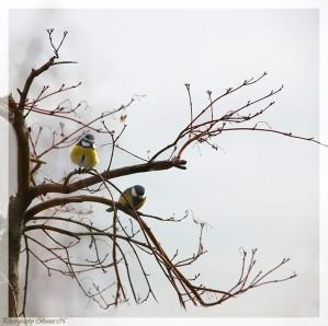 coucou-oiseau.JPG
