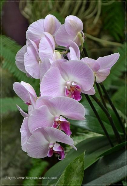 Jardin des Plantes 1 000 orchidées 3