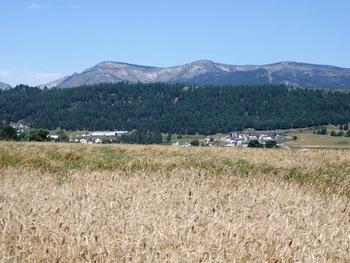 Le plateau est couvert de champs de seigle