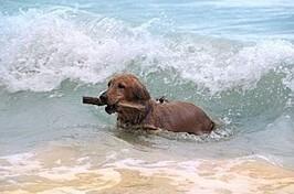 chien-mer.jpg
