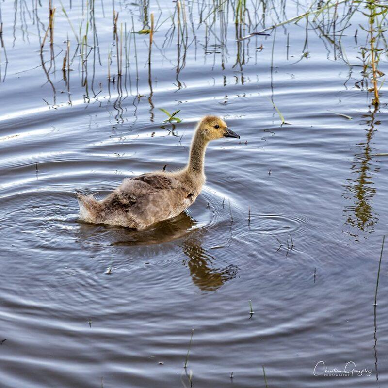 Sur l'eau tout doucement...