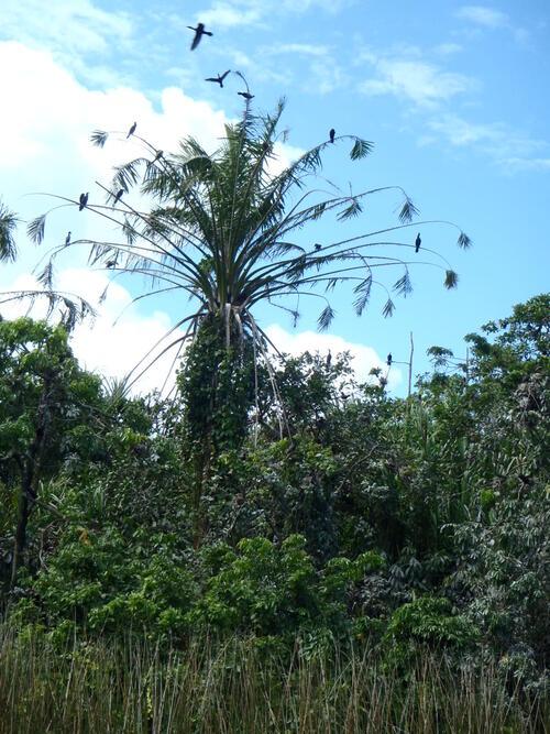 Tikal par le Rio Dulce
