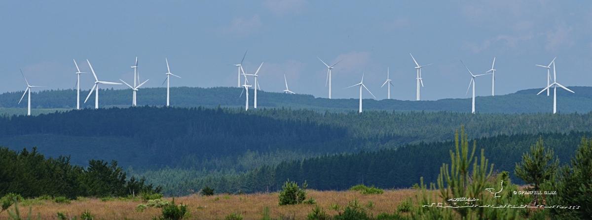 339 - Champ d'éoliennes