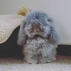 Avoir un lapin ?