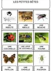 Lexique - complément petites bêtes