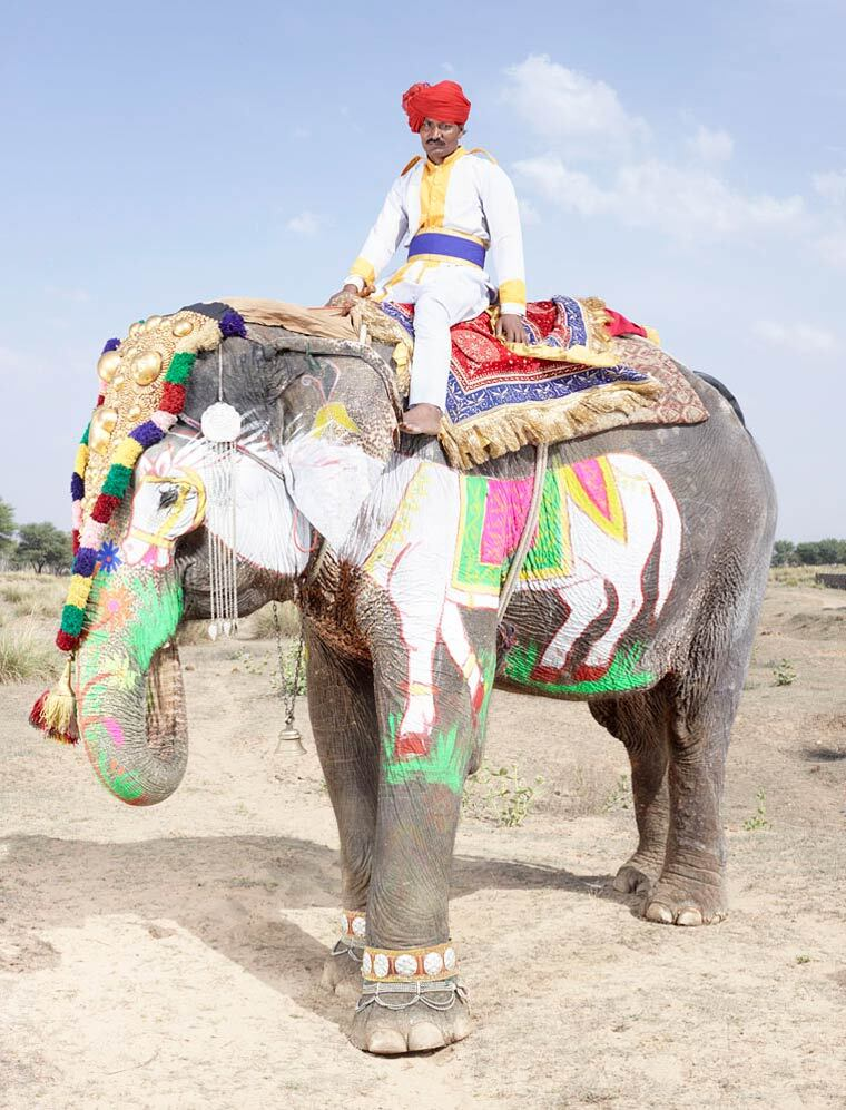 charles-freger-painted-elephants-13