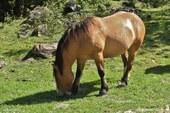 Cheval dans les Pyrénées Espagnoles